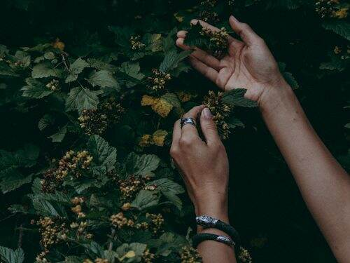 Pair of hands touching leaves in the forest