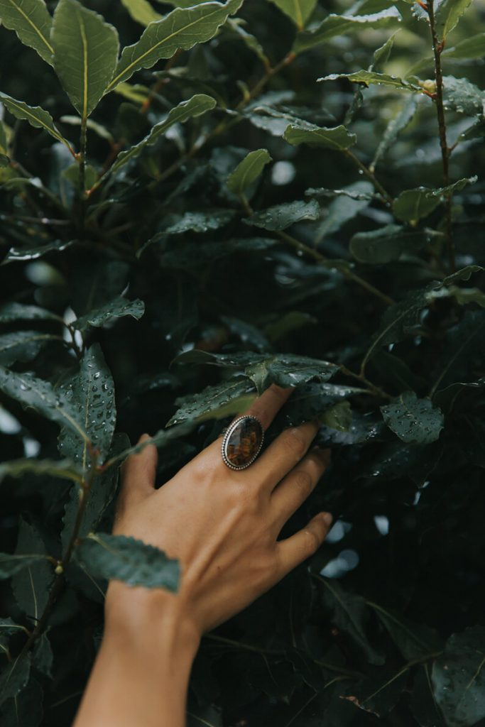 Hand with large ring reaching for Laurel leaves
